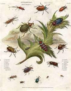 Insects Rule the World
