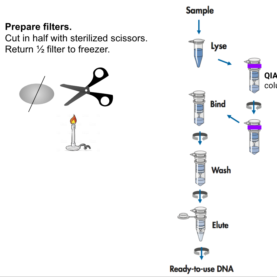 Dna Extraction From Filters Using Qiagen Dneasy And Qiashredder