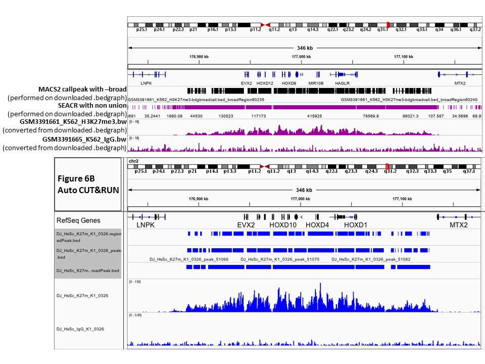 AutoCUT&RUN: genome-wide profiling of chromatin proteins in