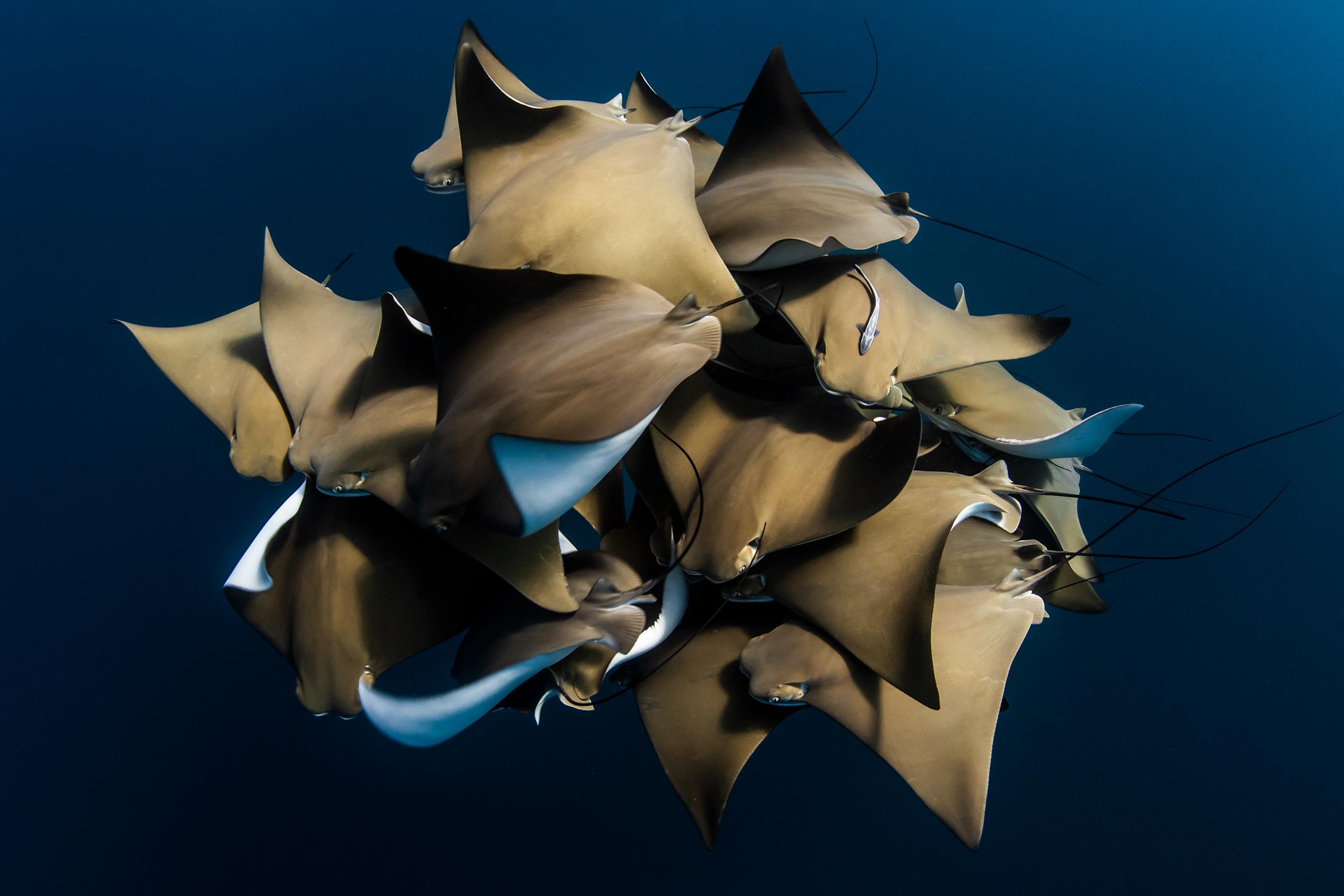 © Alex Kydd, Australia, Shortlist, Open, Natural World & Wildlife, 2020 Sony World Photography Awards