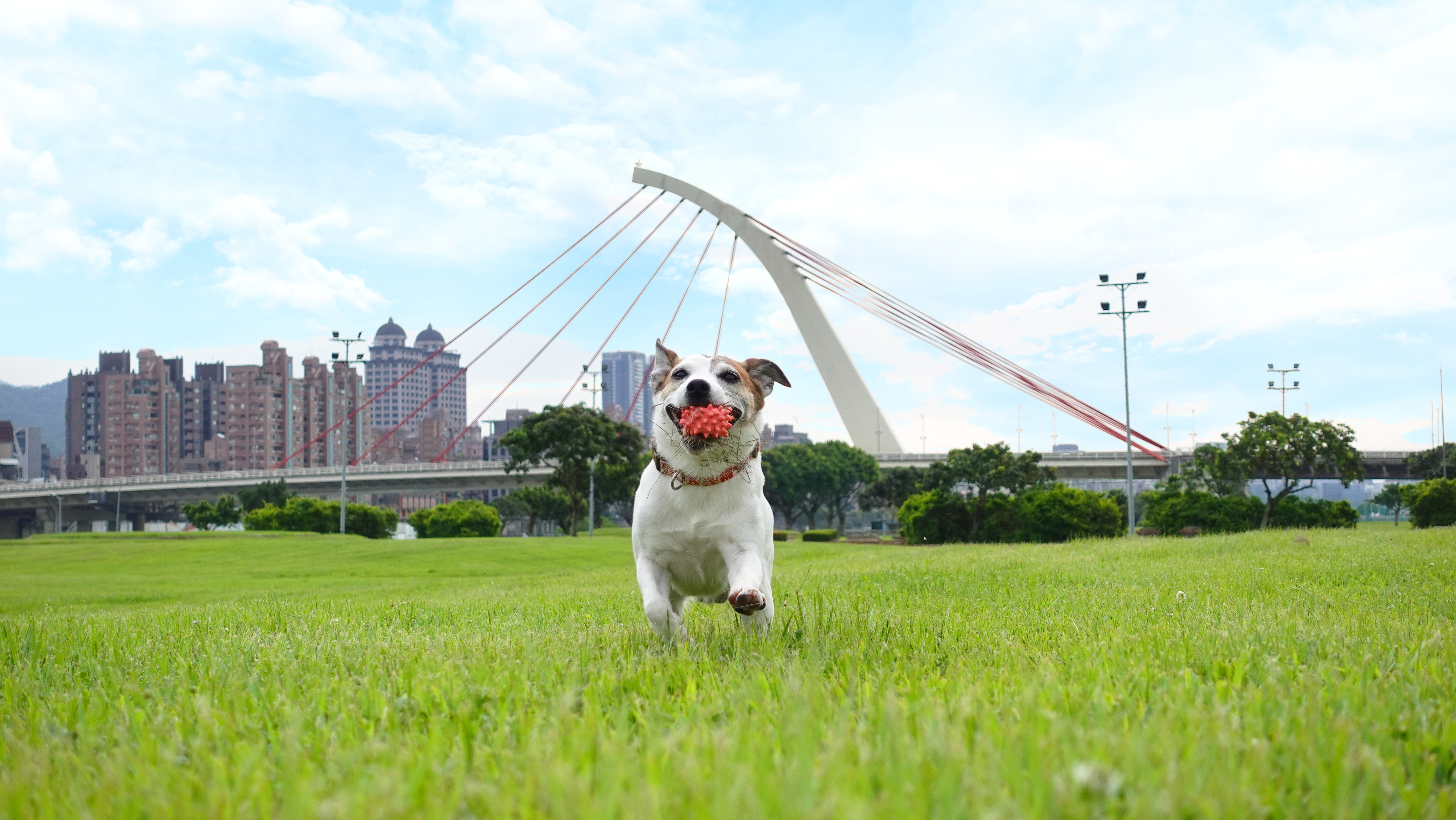 Real-time-Tracking-Dog