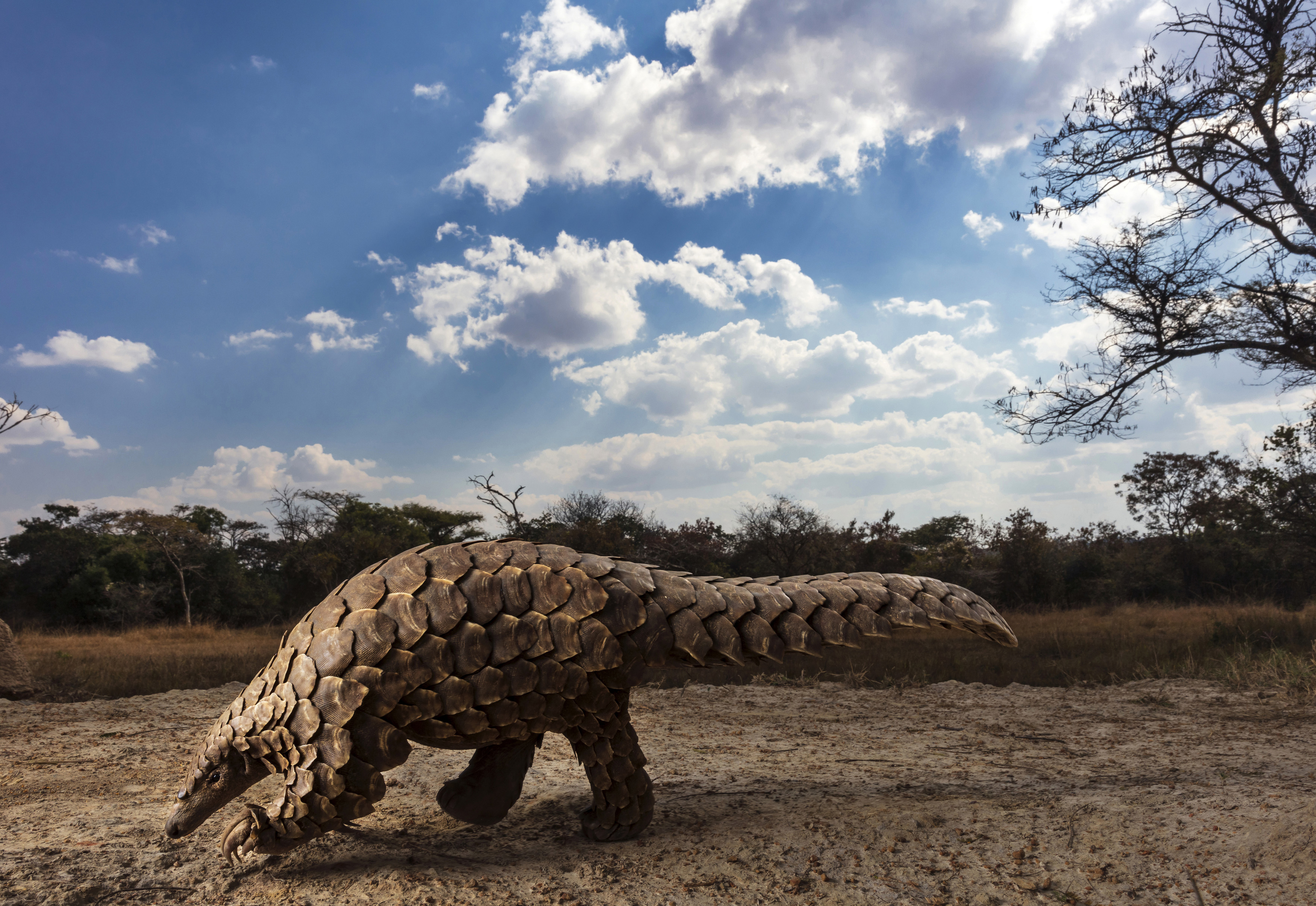 © Brent Stirton, South Africa, Category Winner, Professional, Natural World & Wildlife, 2020 Sony World Photography Awards