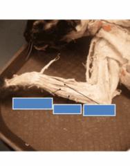 anatomy-test-1-lab-4-part-2
