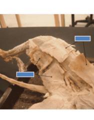 anatomy-test-1-lab-5-part-1