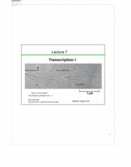 transcription-i-lecture-notes-from-the-evening-class-