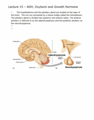 adh-oxytocin-and-growth-hormone