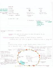 bioc21-bgyc21-cartilage-diagrams-included-