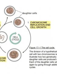bioc-212-arnim-pause-cell-cycle-notes-pdf