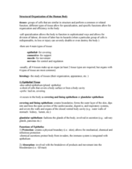 structural-organization-of-the-human-body-notes-doc
