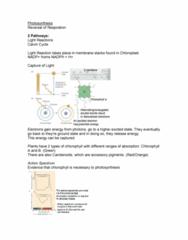 12-photosynthesis-docx