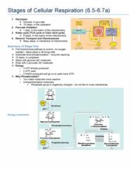 bio-lecture-11-docx