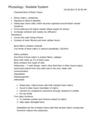 skeletal-system-notes-docx
