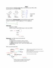 kang-1-summary-docx