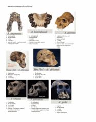 fossil-mid-term-study-pdf
