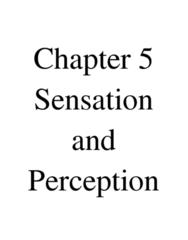 5-sensory-and-perception-docx