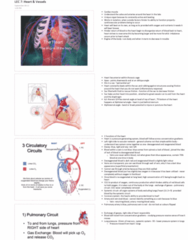 lec-7-heart-vessels-pdf