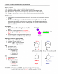 lecture-11-dna-structure