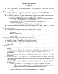 summary-5-cellular-respiration-doc