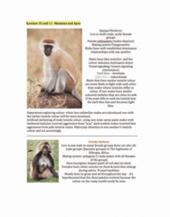 monkeys-and-apes-lectures-11-12-docx