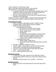anatomy-notes-the-heart-docx