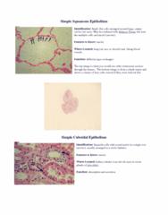 lab-1-human-development-and-anatomy-docx