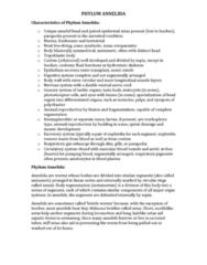 bio2231-phylum-annelida-characteristics