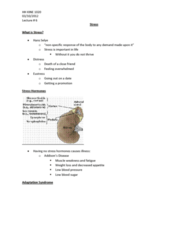 stress-lecture-6-docx
