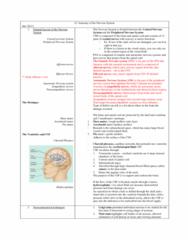 u3-anatomy-of-the-nervous-system-docx