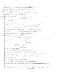 plant-diversity-i-spore-dispersing-plants-notes