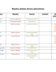 muscles-and-nerves-table-docx