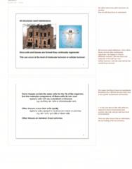 lecture-6-morphogenesis-pdf