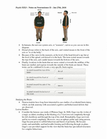 neuroscience-ii-pdf