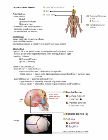 lecture-5-axial-skeleton-doc