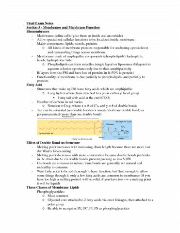 cell-bio-summary-final-exam-docx