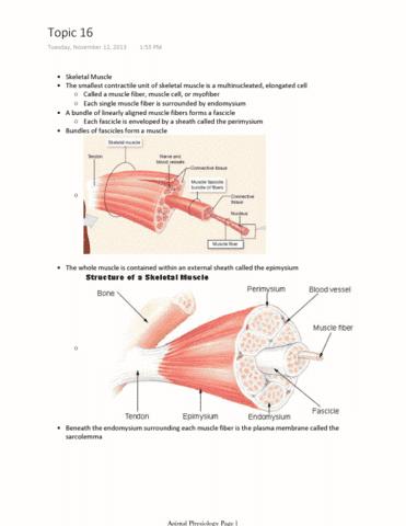 muscles-pdf