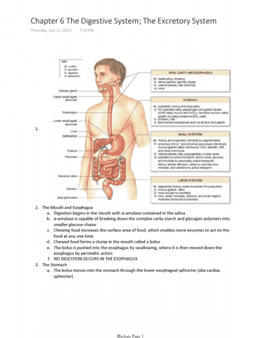 chapter-6-the-digestive-system-the-excretory-system-pdf