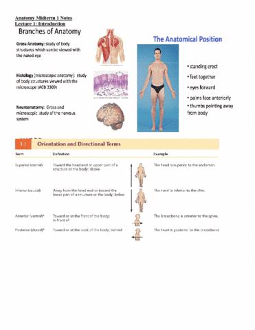 anatomy-midterm-1-notes-docx