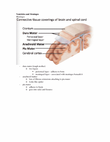 anatomy-test-1-lecture-13-docx