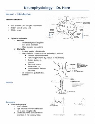 neurophysiology-dr-hore-docx