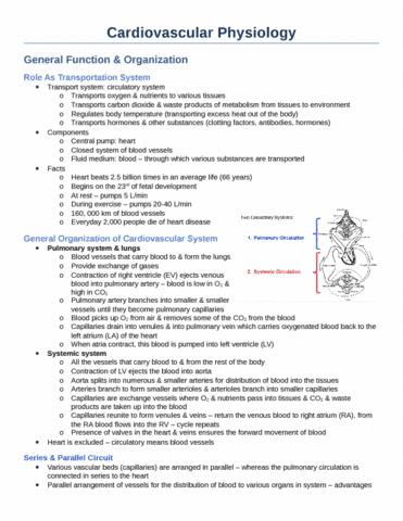 cardiovascular-physiology-docx