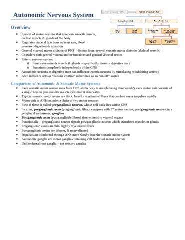 autonomic-nervous-system-docx