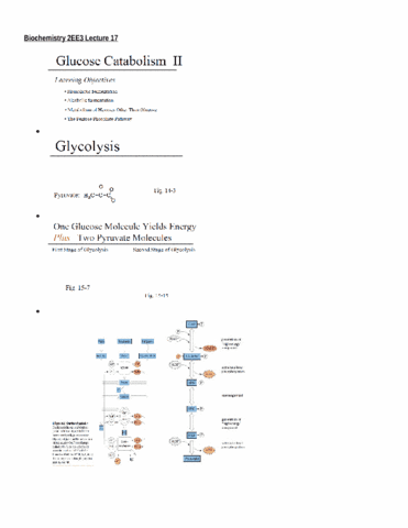 biochemistry-2ee3-lecture-17-docx