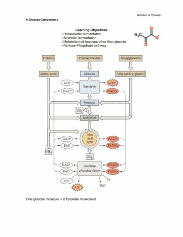 h-glucose-catabolism-ii-pdf
