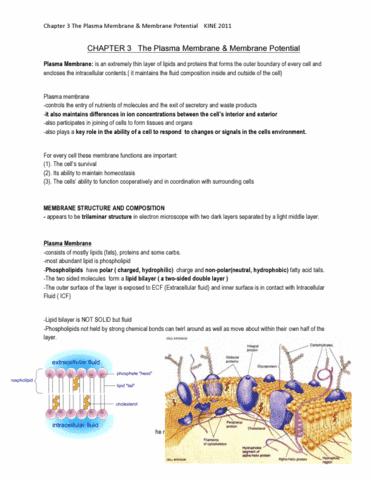 chapter-3-kinesology-pdf