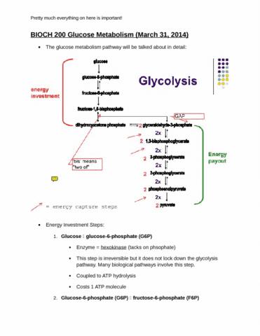 bioch-200-march-31-2014-glucose-metabolism