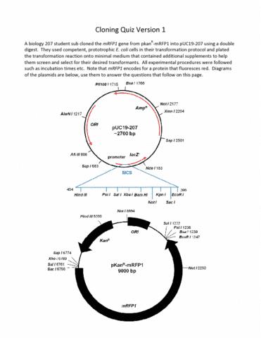 cloning-quiz-version-1-plasmids-pdf