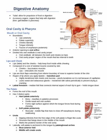 digestive-anatomy-docx