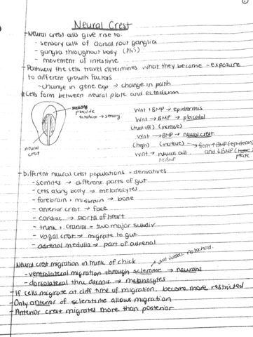 neural-crest-pdf