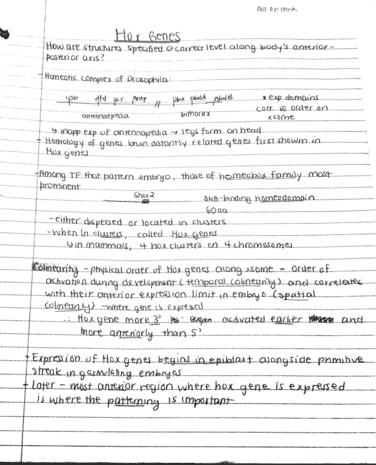 hox-genes-pdf