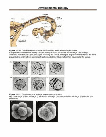 developmental-biology-figures-docx